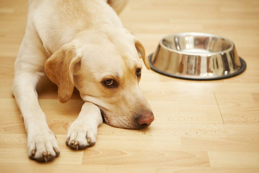 תזונה נכונה לכלב